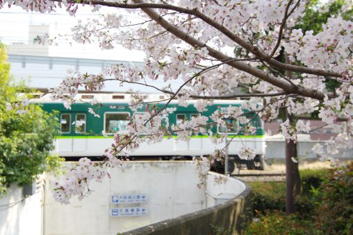 桜と京阪電車 / Sakura with Keihan train