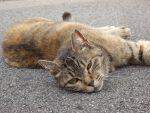 ずぶとい野良猫 – Stray cat