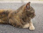 動じない野良猫 – Stray cat