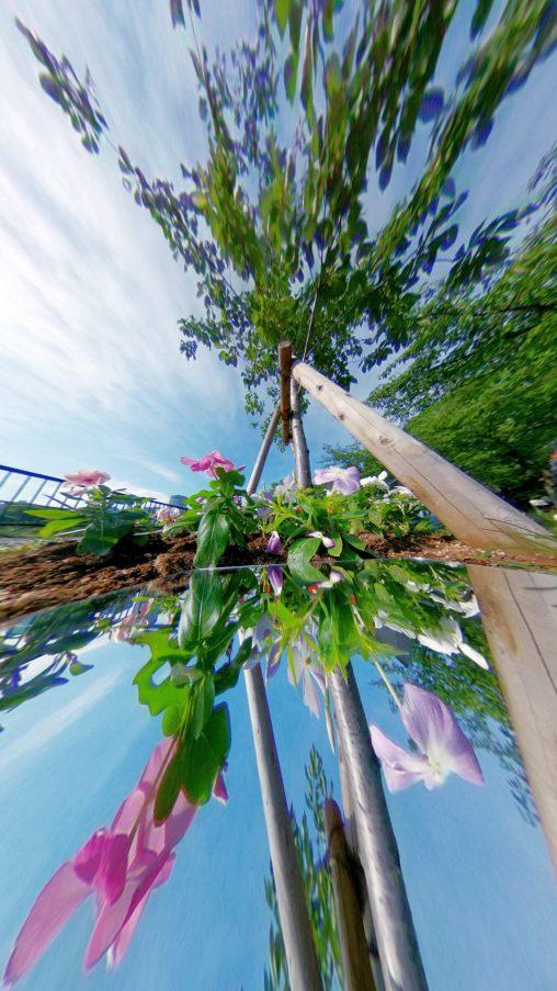 空花花空 – Sky and Flowers