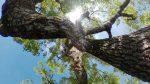 放散する木 – Tree branch