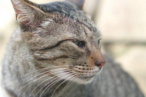 おとなしい猫 – Stray cat
