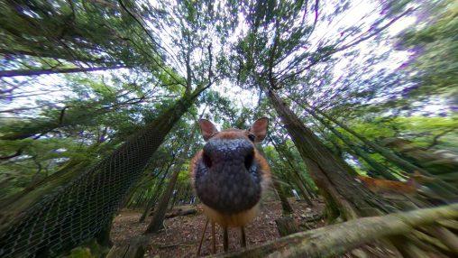 ぬっ – Deer nose