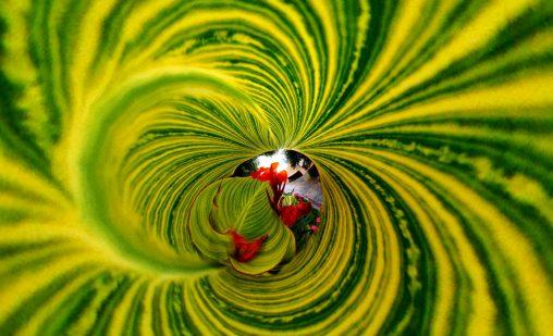 お誂え向きの花 – Flower and leaf