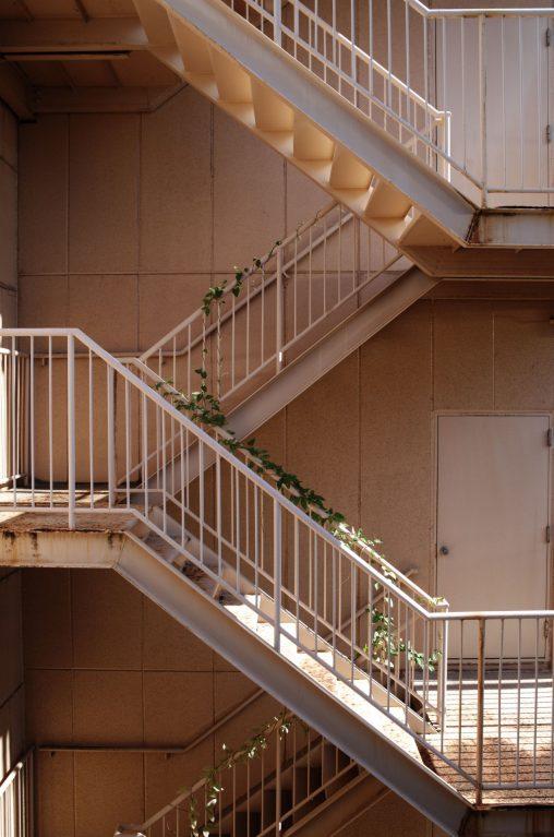 廃ビルの階段 – Ivy climbs