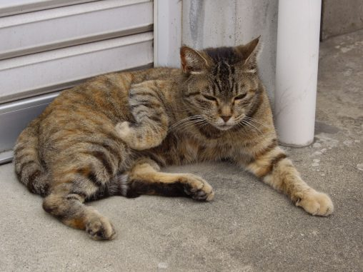ゆったり野良猫 – Stray Cat