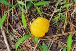 打ち捨てられたみかん – Abandoned Satsuma orange