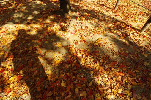 自影撮り – My Shadow