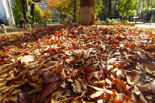 落ち葉に迫る – Autumn Leaves