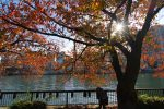 太陽隠し – The Tree I like