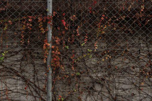 フェンス、蔦、ブロック塀 – Fence, Ivy and Block wall