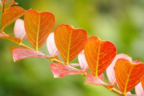 葉並びがいい – ♥♥♥