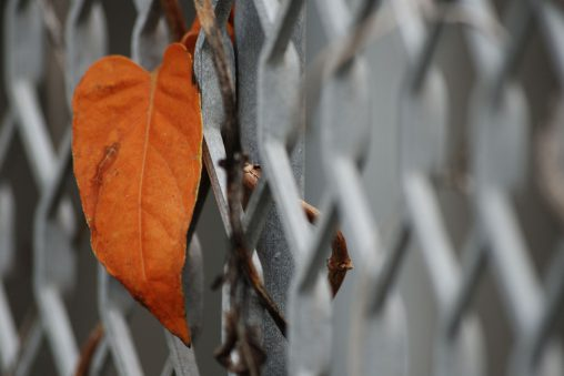 葉 – A Leaf