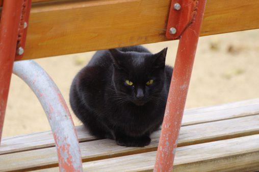 黒猫が見ている – A Black Cat is watching you.