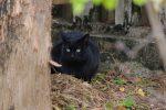微妙にこっち見てない黒猫 – A Black Cat isn't watching me.