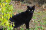 伸びた黒猫 – Stretched cat