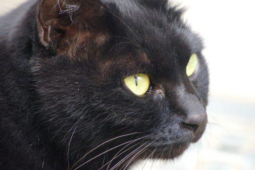 ネコの顔アップ – Close up
