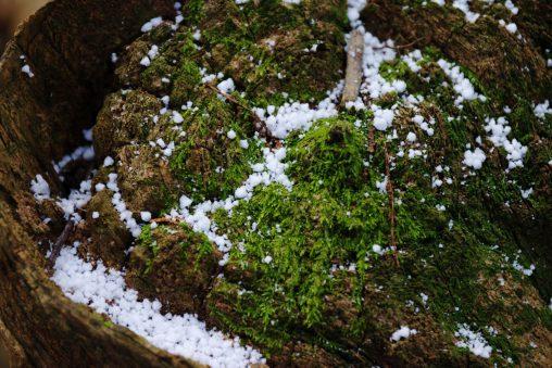 雪と苔むした切り株 – Snow on mossy stump