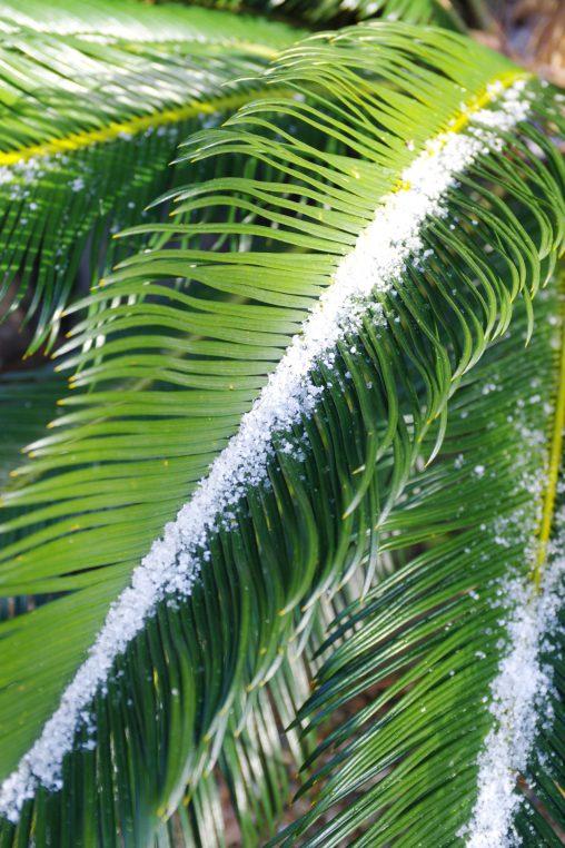 葉と雪 – Leaf and Snow