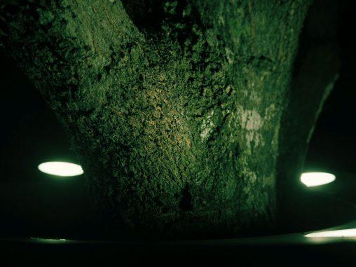ささやかなライトアップ – Illuminated tree