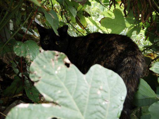 見てる猫 – Stray cat