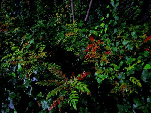 茂る – Bush