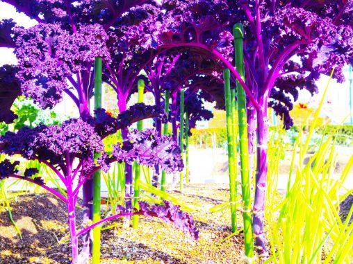 スティックカリフラワー – Stick Cauliflower