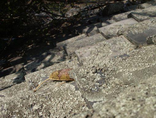 落ち葉一枚 – Leaf on roof