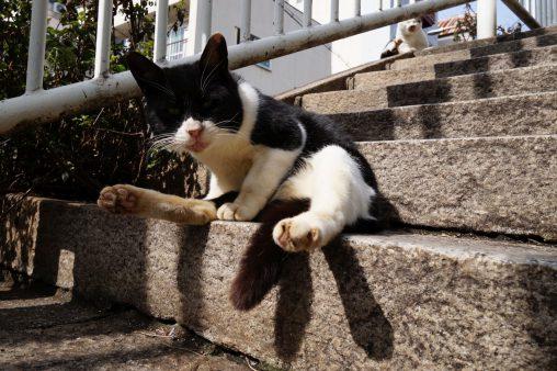 たくましく生きる – Street Cats