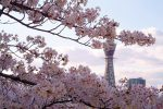 春の通天閣 – Tsutenkaku in Spring