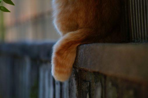 しっぽ – Cats tail