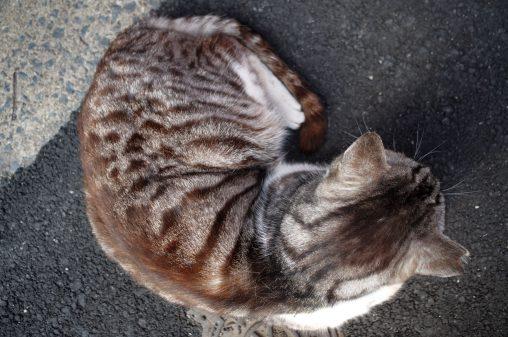 カーブ – Sitting cat