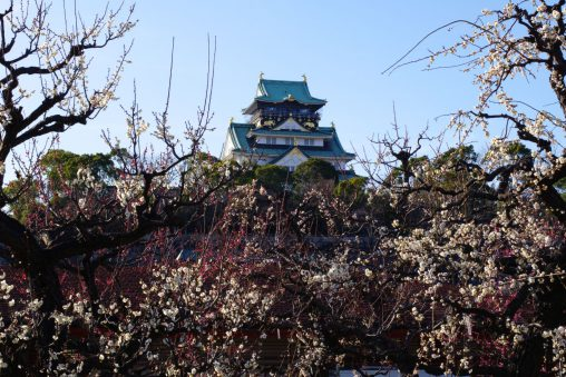 梅盛りの天守 – Main tower of Osaka Castle