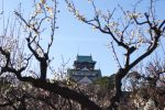 梅と大阪城 – Plum and Osaka Castle Main tower