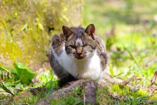 めっちゃ睨むネコ – Staring Cat