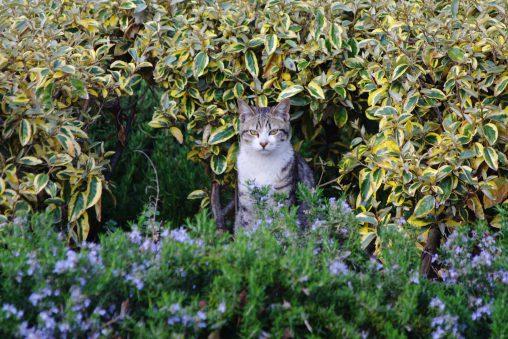 身を守る – Defensive Cat