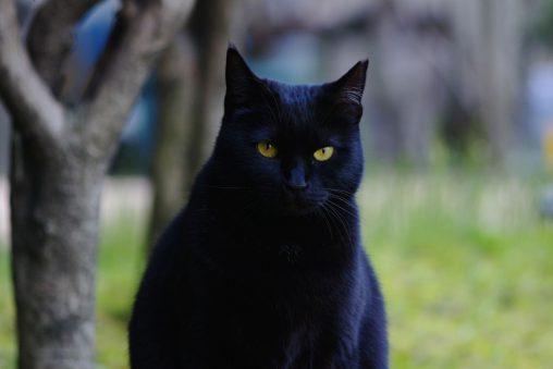 瞳 – Black cat