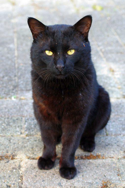 おすわり – Sitting cat