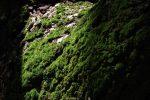 苔を照らす – Lighted moss