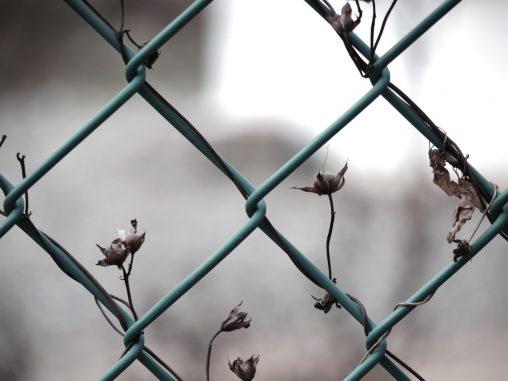 フェンスと朝顔の実 – Fence and Seeds