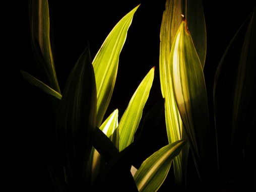 葉ライト – Lightened leaves