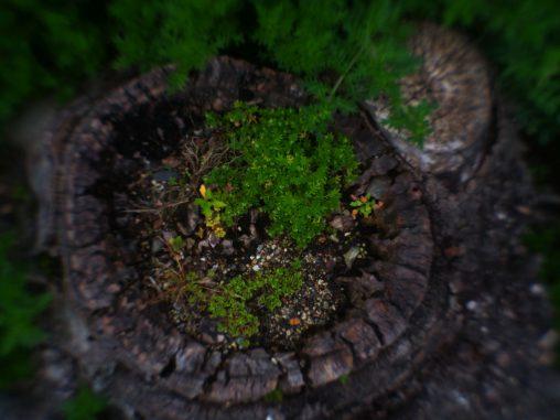 切り株の小庭 – Little garden