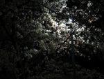 照らす – Lighten Sakura