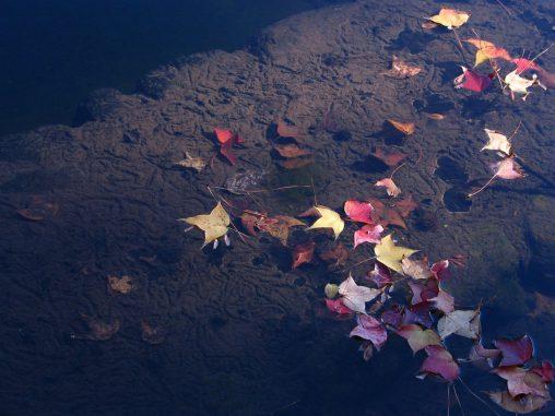 水底アート – Patterns under water