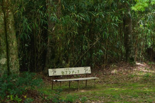 古いベンチ – Old bench