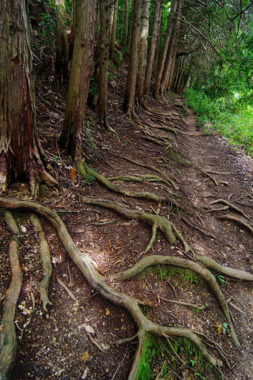 根が守る – Roots keep dirt road
