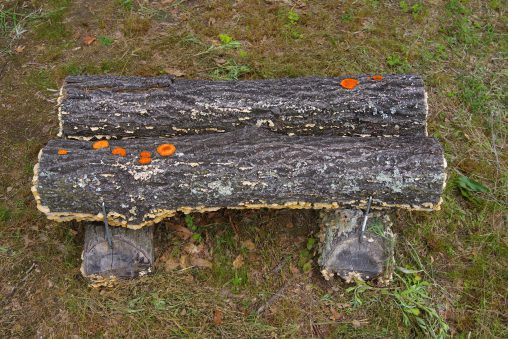 """ソーシャルディスタンス – """"Social Distancing"""" Mushrooms"""