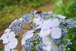 トラカミキリ – Longhorn beetles