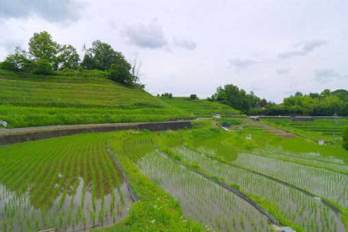 下赤坂の棚田 –  Terraced rice-fields
