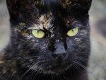 目が合う猫 – Stray cat